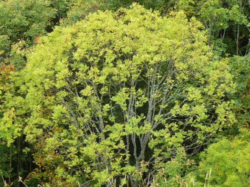 Cet arbre-ci possède encore, ses feuilles vertes.