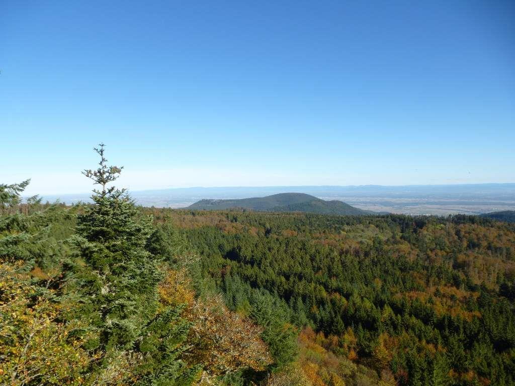 Le Mont Sainte-Odile est visible au milieu, au fond d'un très vaste océan forestier.