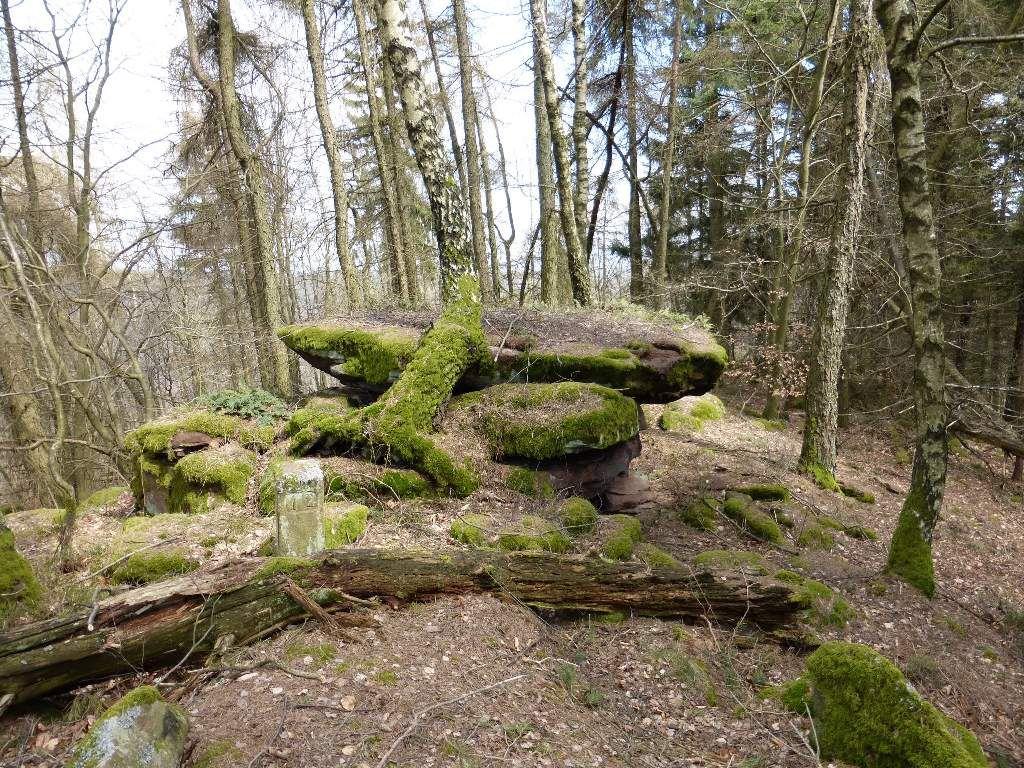 Le sommet se révèle très densément boisé et le déplacement y est assez chaotique ...