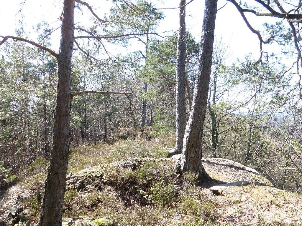 L'environnement sylvicole est remarquablement sauvage et préservé, au sommet du Gallenberg.