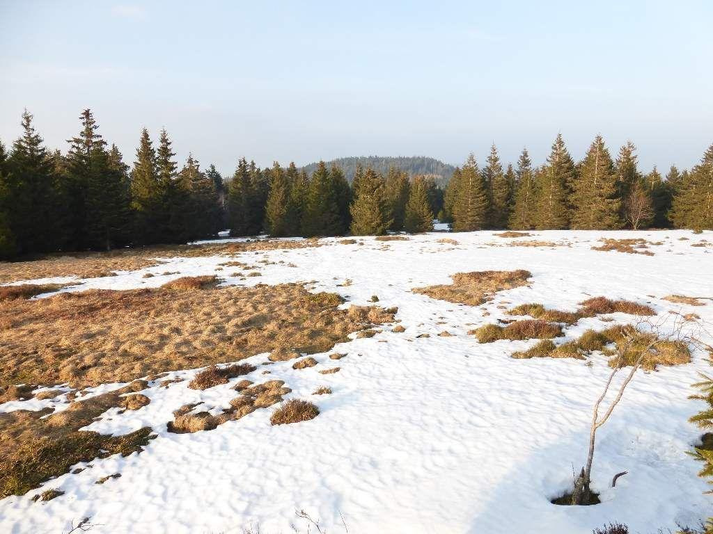La chaume du Noll, avec vue sur le Grossmann au fond (alt. maxi : 986 m).