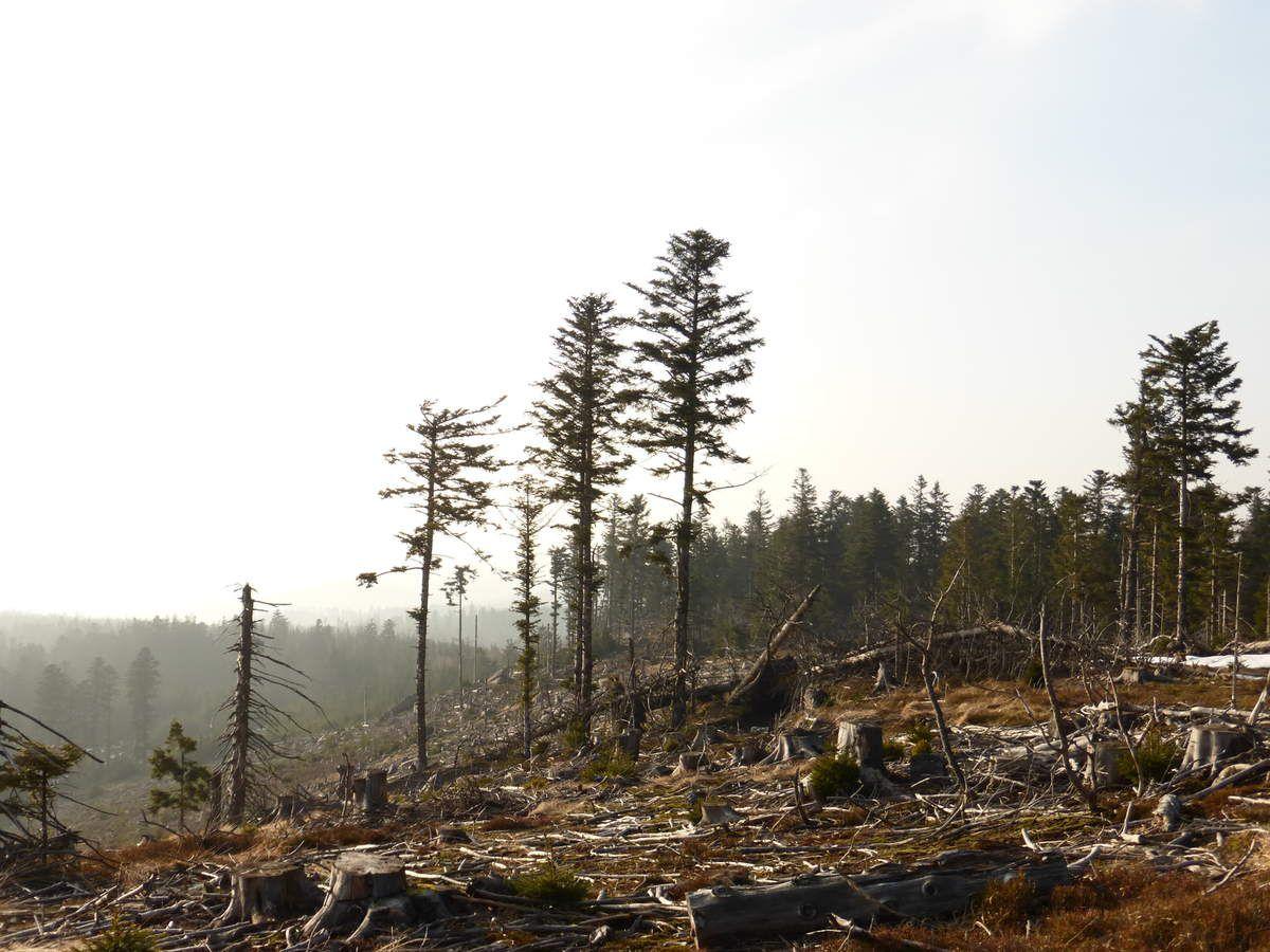 """Environnement dévasté, observé à la chaume du Noll (traces de l'ancienne tempête """" Lothar """" ! )."""