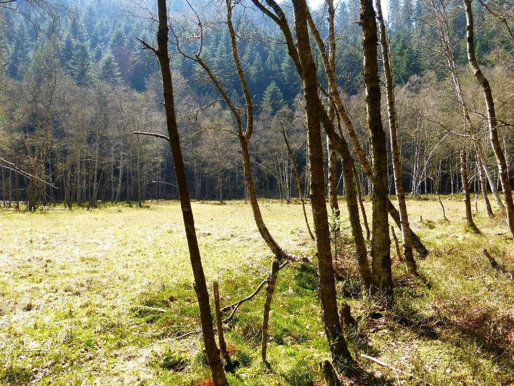 Vue d'ensemble d'approche, de la petite tourbière forestière du Grafenweiher.