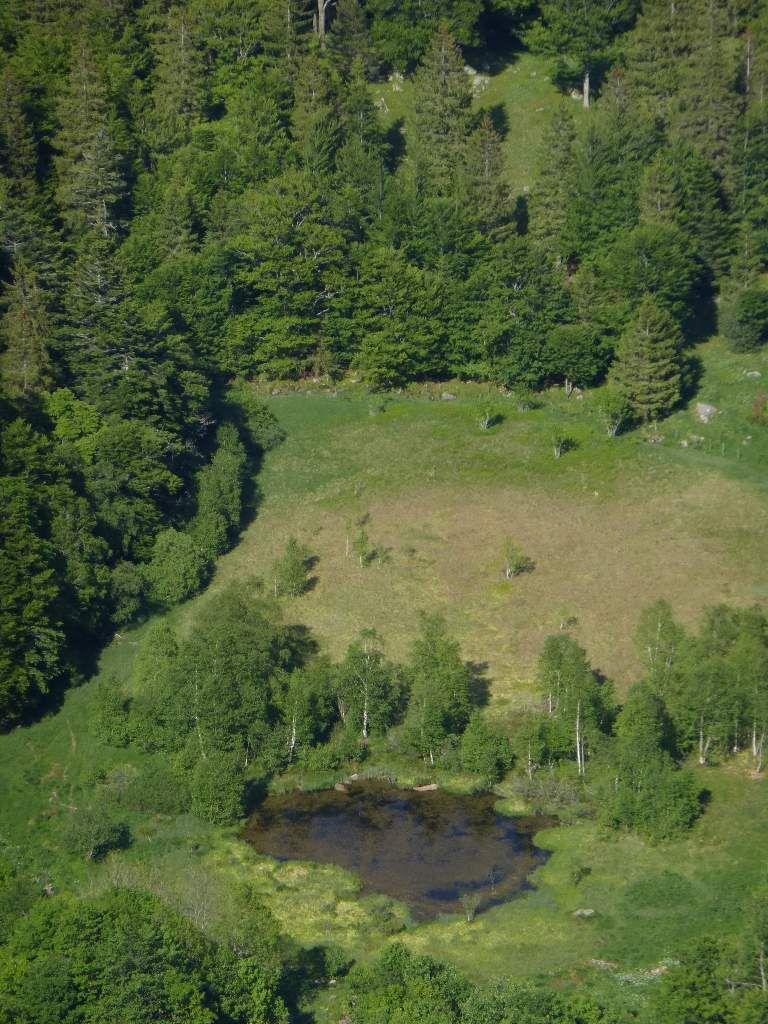 """L'étang """" noir """" , de la tourbière de fond de cirque du Frankenthal (alt. 1030 m)."""