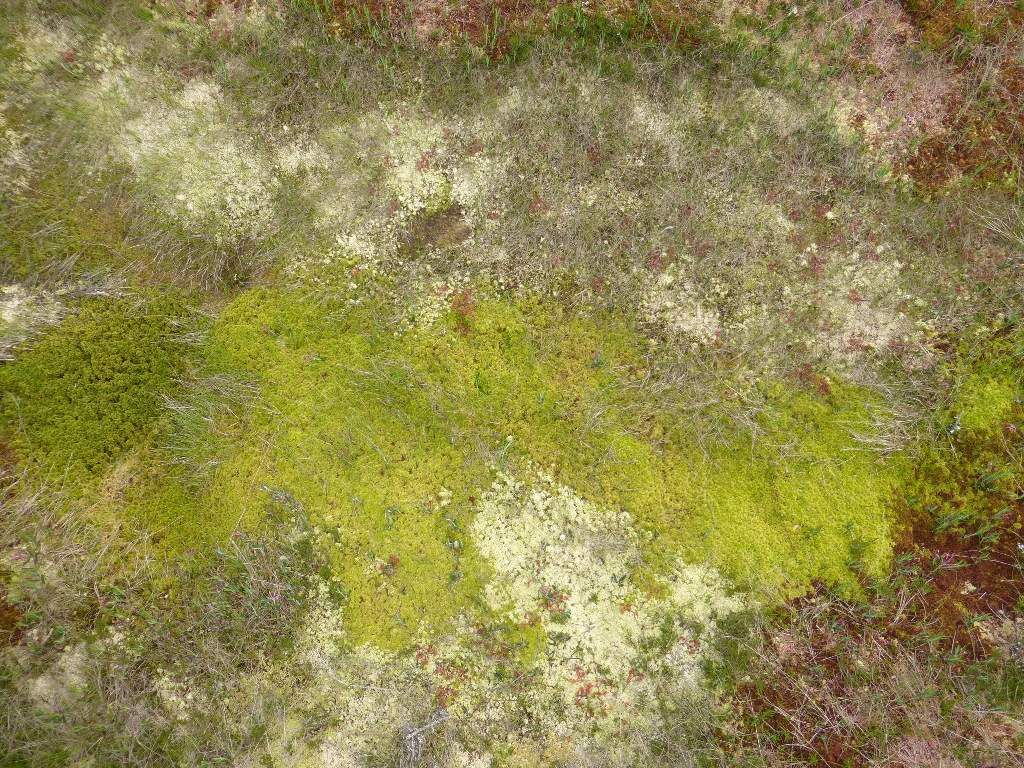 Au sol, je suis intrigué, par ces trois couleurs de mousses (blanches, vertes et rouges ! ).