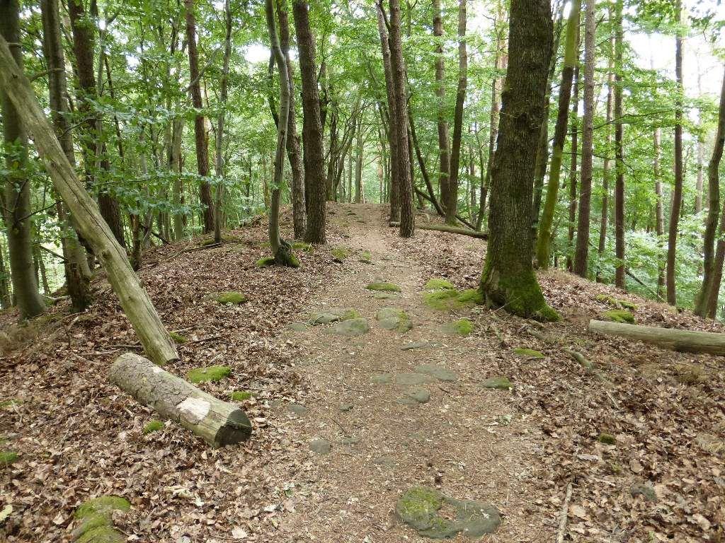 Cheminement pittoresque, en plein coeur de la forêt immersbergeoise ...