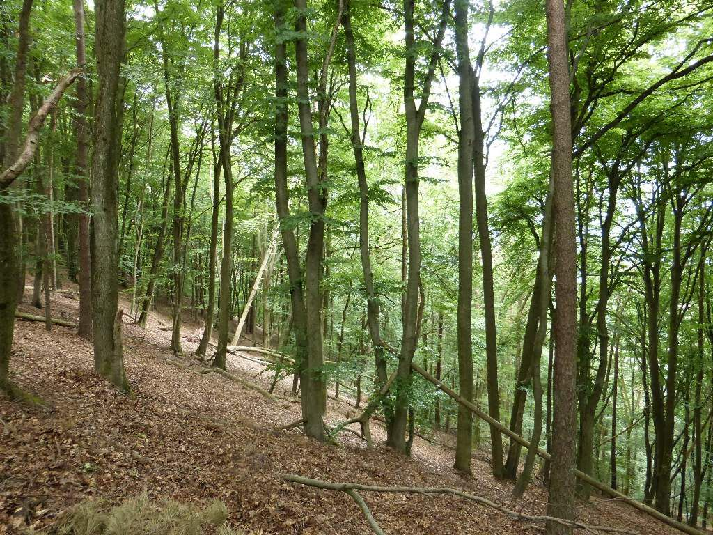 Le versant Nord est beaucoup plus raide, que le versant Sud, à l'Immersberg ...