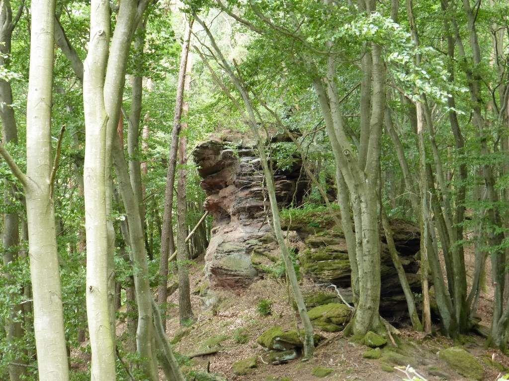 Le troisième monolithe de l'Immersberg est très profondément enfoui, sous un épais couvert végétal !