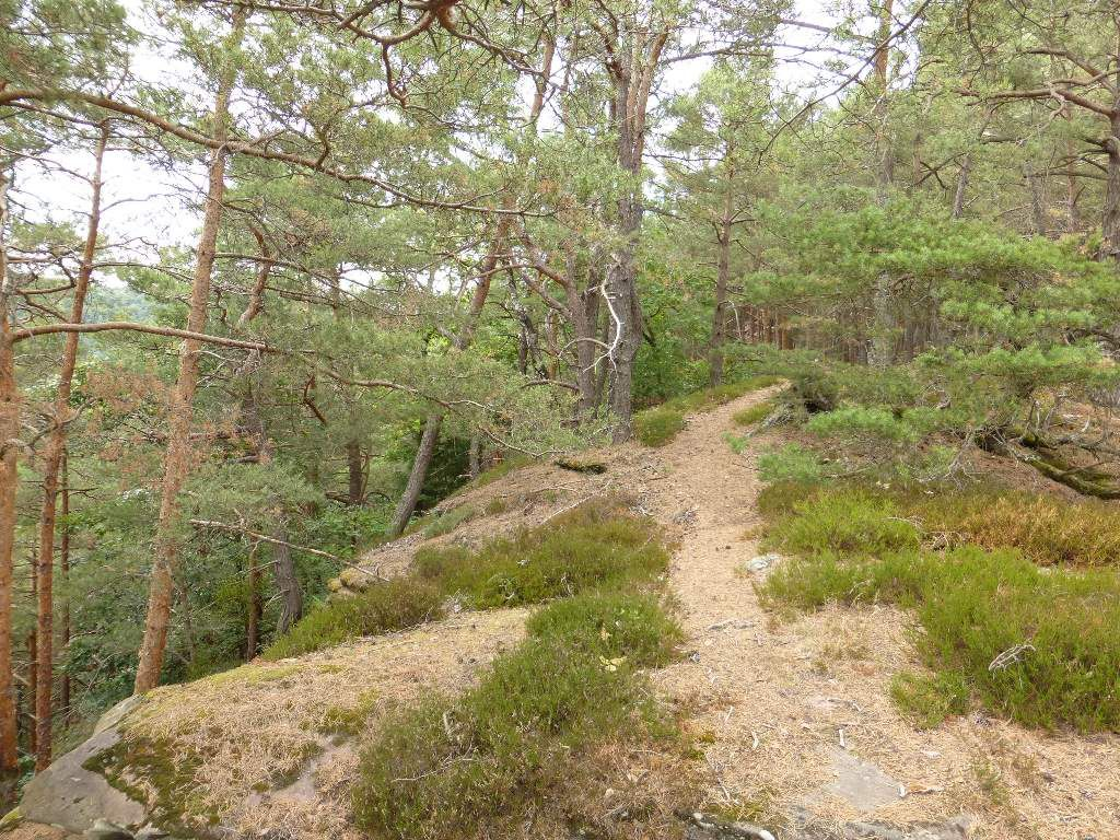 Le déplacement est très aventureux, dans cette partie du Mülleräckerberg.