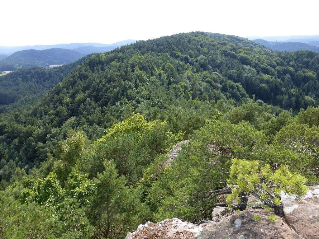 Le Satterberg : un panorama de rêve, entre Erfweiler et Schindhard ... À ne pas rater !