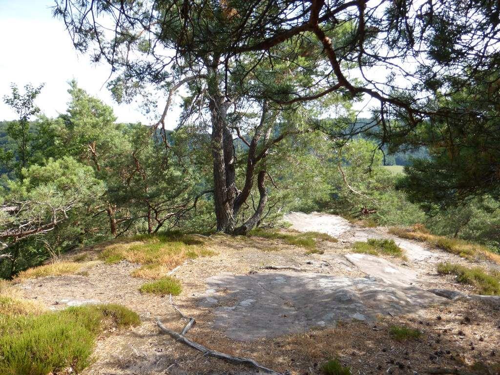 Je me situe ici, sur la partie sommitale du site du Nonnenfels ...