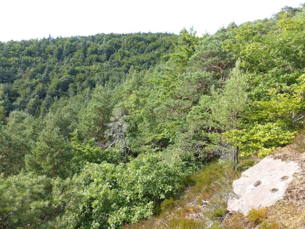 Vue sur le massif porteur de l'Eichelberg, sis au-delà des 400 mètres d'altitude.