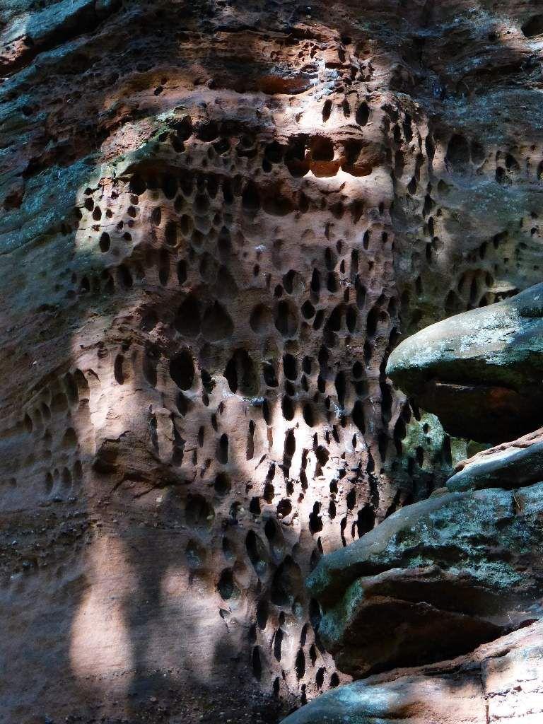 Le grès saumoné des Pferchfeldfelsen, recèle de très nombreuses érosions alvéolaires ...