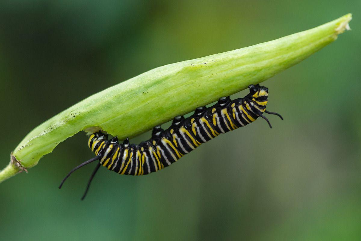 La ferme aux papillons - Episode 1/2