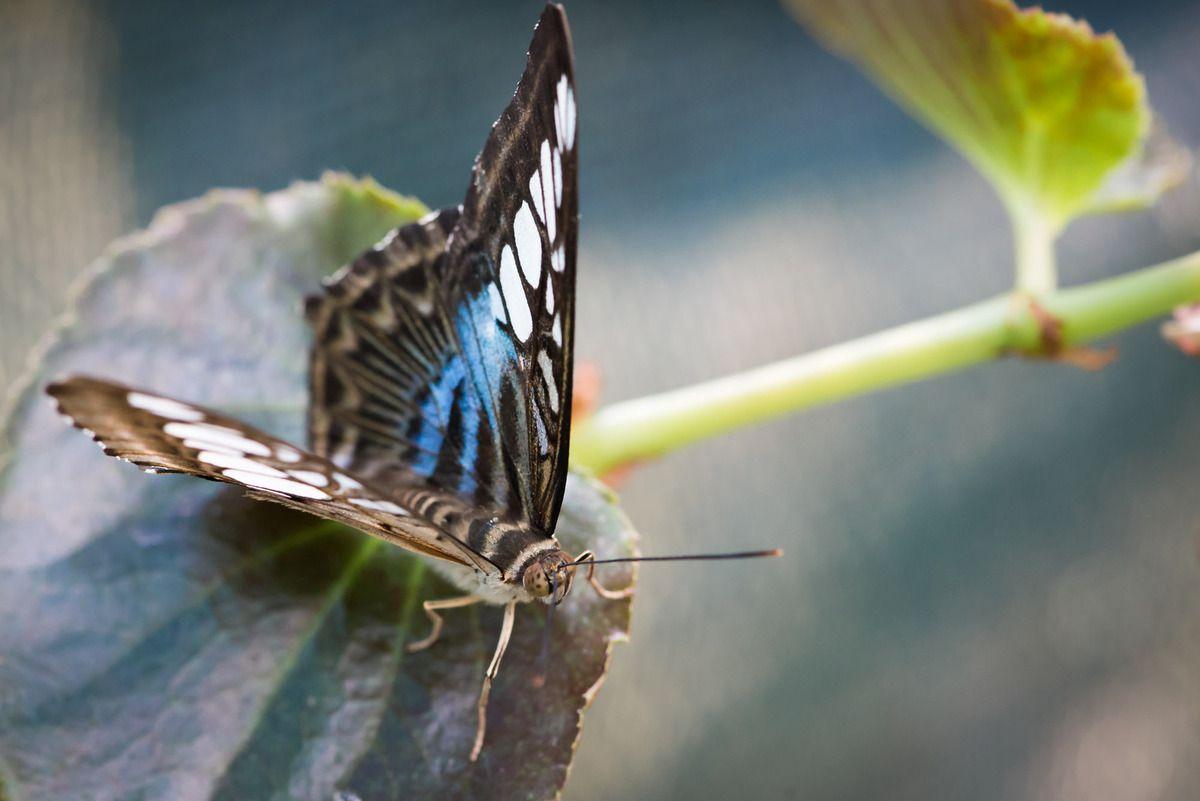 La ferme aux papillons - Episode 2/2