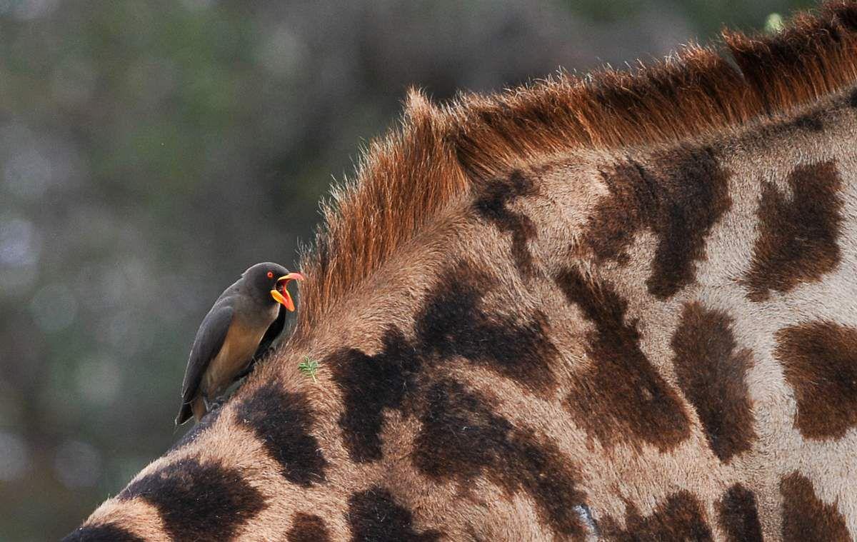 Animaux: en Tanzanie