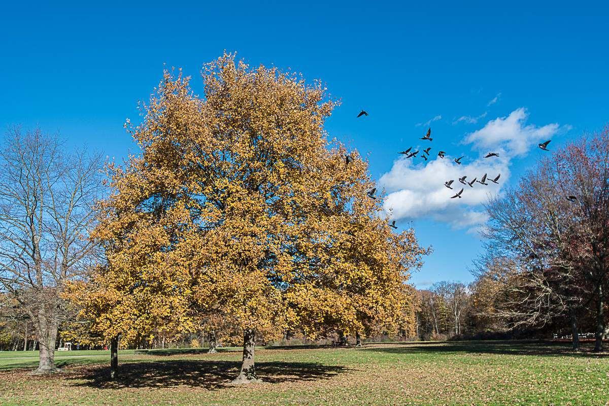 L'étang du parc Lacroix Laval