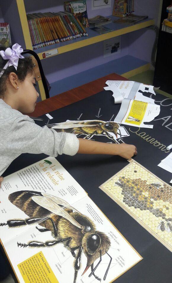 Réalisation d'une affiche pour la sauvegarde des abeilles chez les élèves de 1ère années