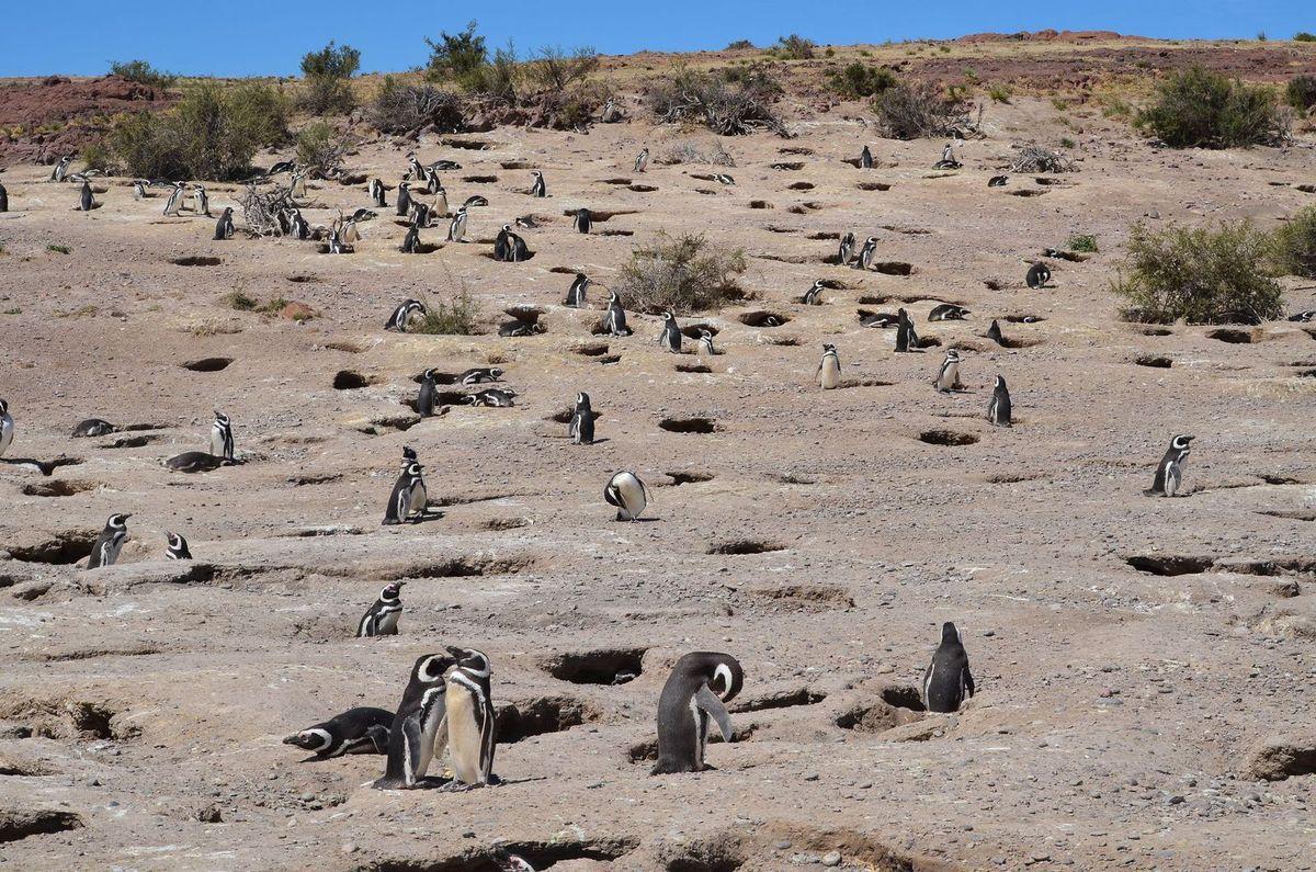 29/11/14 : de Puerto Madryn à Cabo dos Bahias
