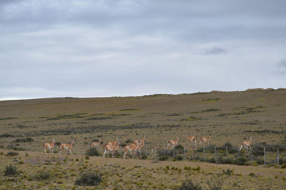 05/12/14 : de Comodoro Rivadavia à Paso Integracion Austral