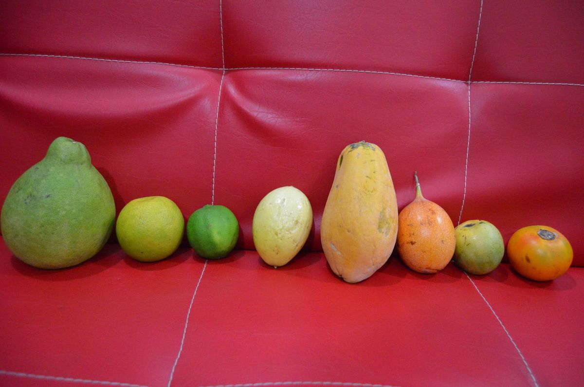 Pamplemousse, orange, citron,maracuya, papaya, granadilla,mango de azucar, lulo