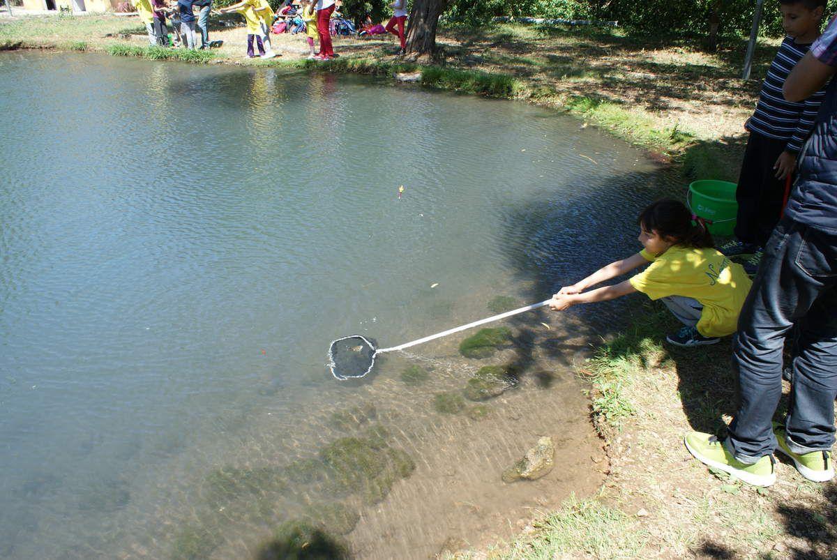 Les CP encadrés par des élèves de CE2 ont participé à une après-midi pêche avec la fédération départementale. Ils ont découverts les poissons de nos rivières et ont relâché toutes les prises qu'ils avaient pu pêcher. Une belle après-midi!