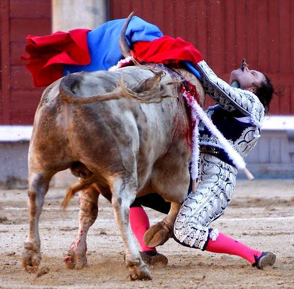 Trop rarement, le taureau prend sa revanche...