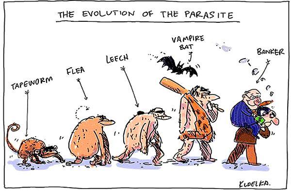 Dessin humoristique qui rend hommage à Charles Darwin !