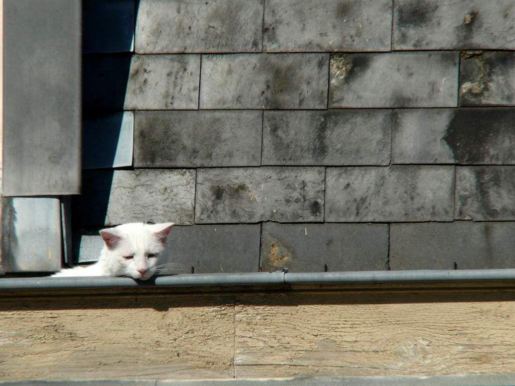 Vie et opinions politiques d'un chat de Hippolyte Adolphe Taine