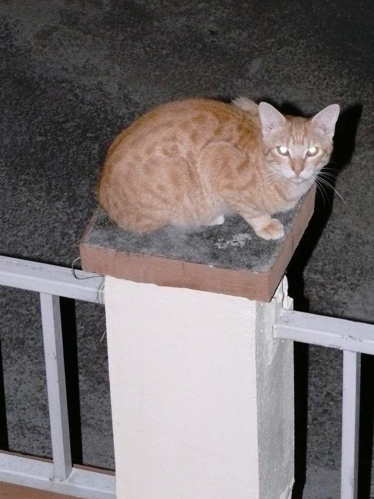 Exterieur nuit le blog de chat pitre for Exterieur boite de nuit