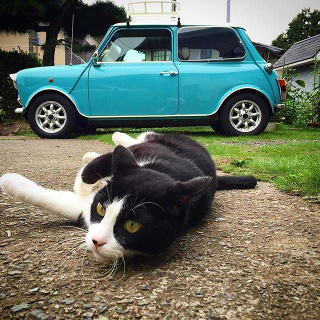 LE CHAT ET LA MINI COOPER