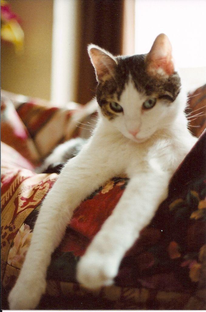 Liberté Egalité Chaternité - Journal d'un chat salarié (collectif)