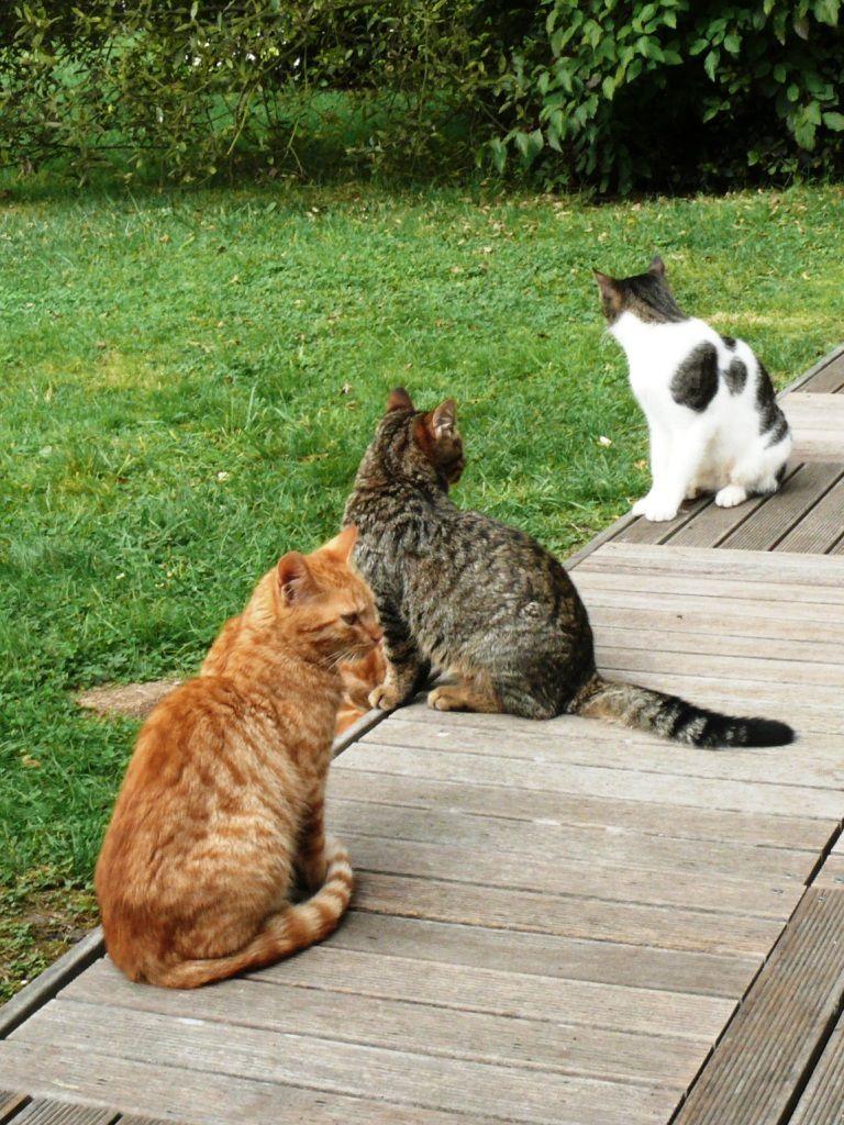 Colette, l'amie des chats