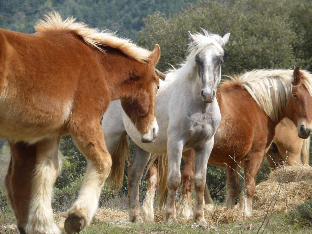 Merveilleux contact avec les chevaux