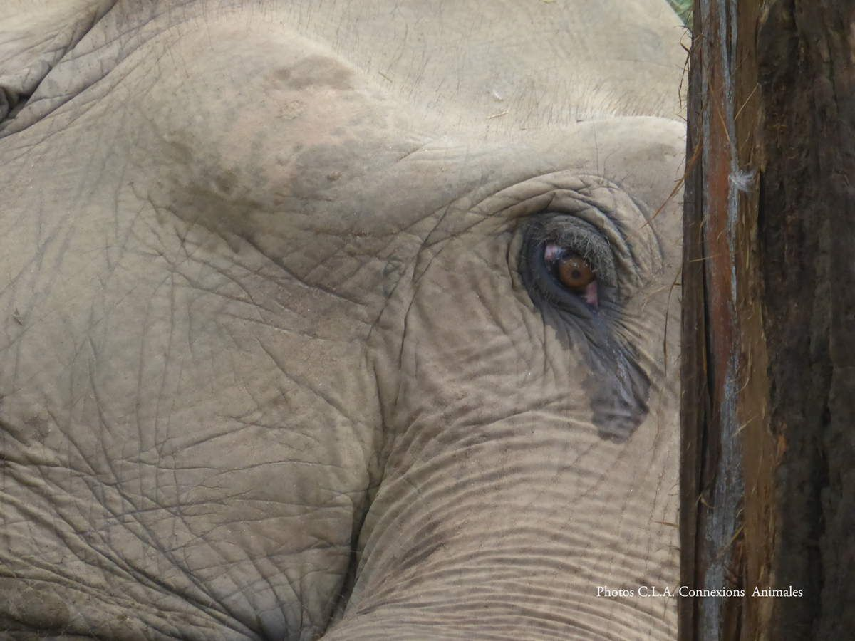 HOMMAGE AUX ELEPHANTS