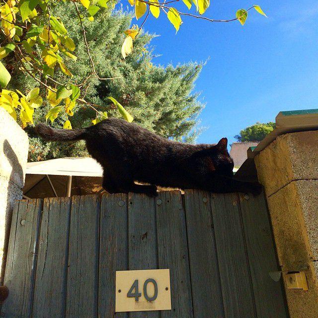 un chat gymnaste