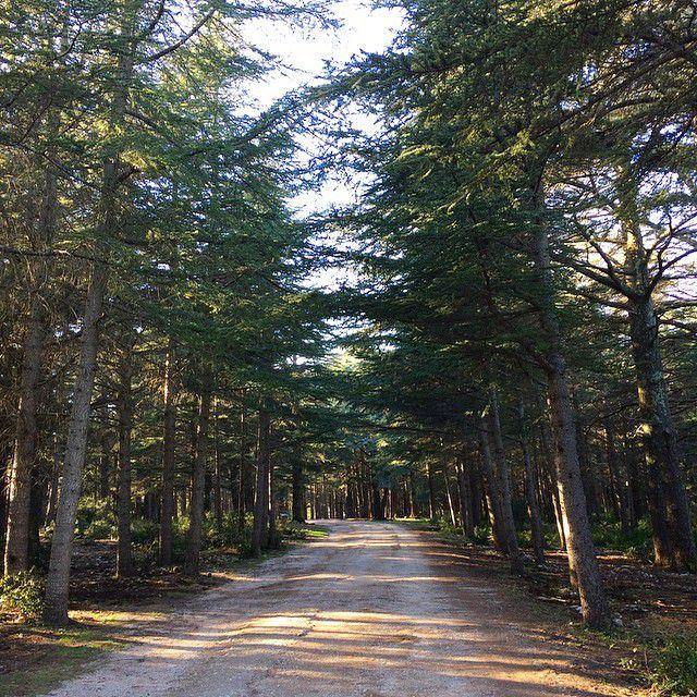 Balade à la forêt des cèdres