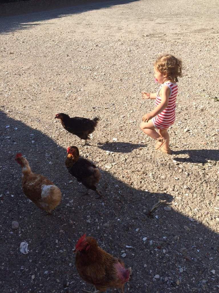 Un enfant, des poules, le bonheur tout simplement !