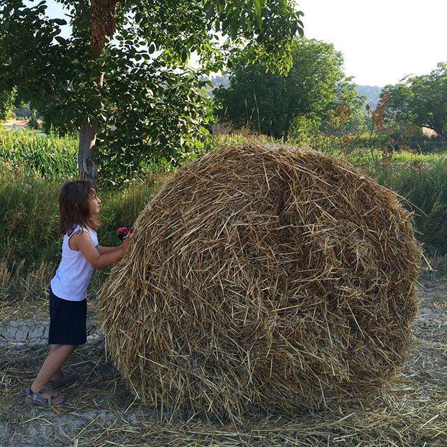L'enfant qui voulait se faire plus grand que la meule de foin