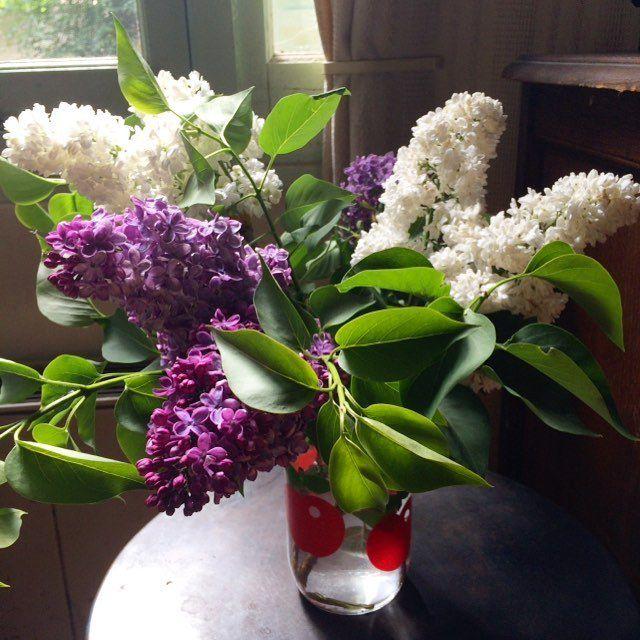 Du lilas frais