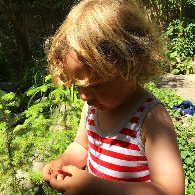 Le petit voleur de fraises