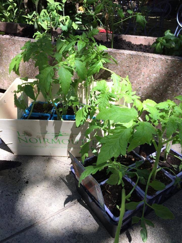 Jardiner avec les enfants, théorie, pratique et petits dérapages