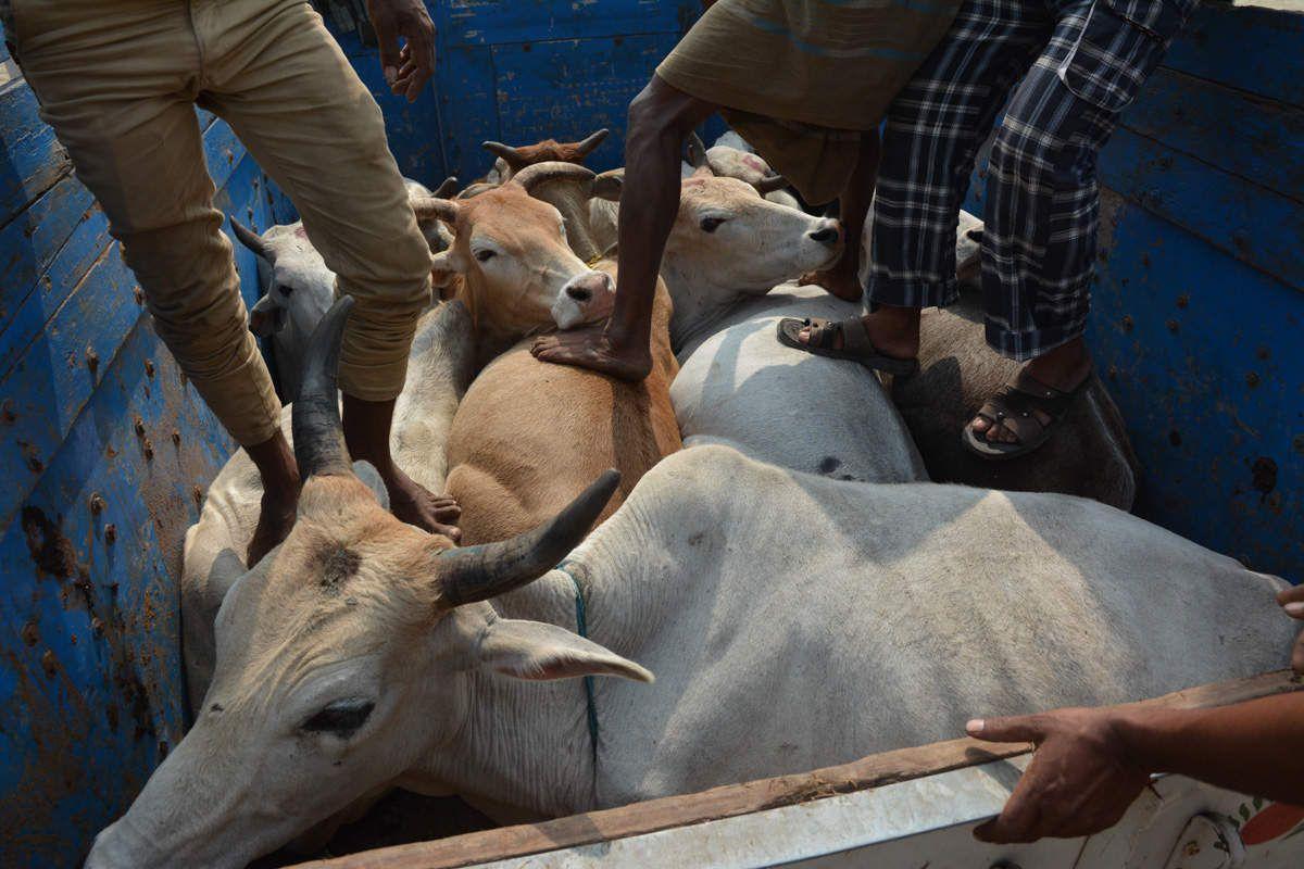 """SUNDERBANS, contrée du tigre du bengale """"mangeur d'homme"""""""