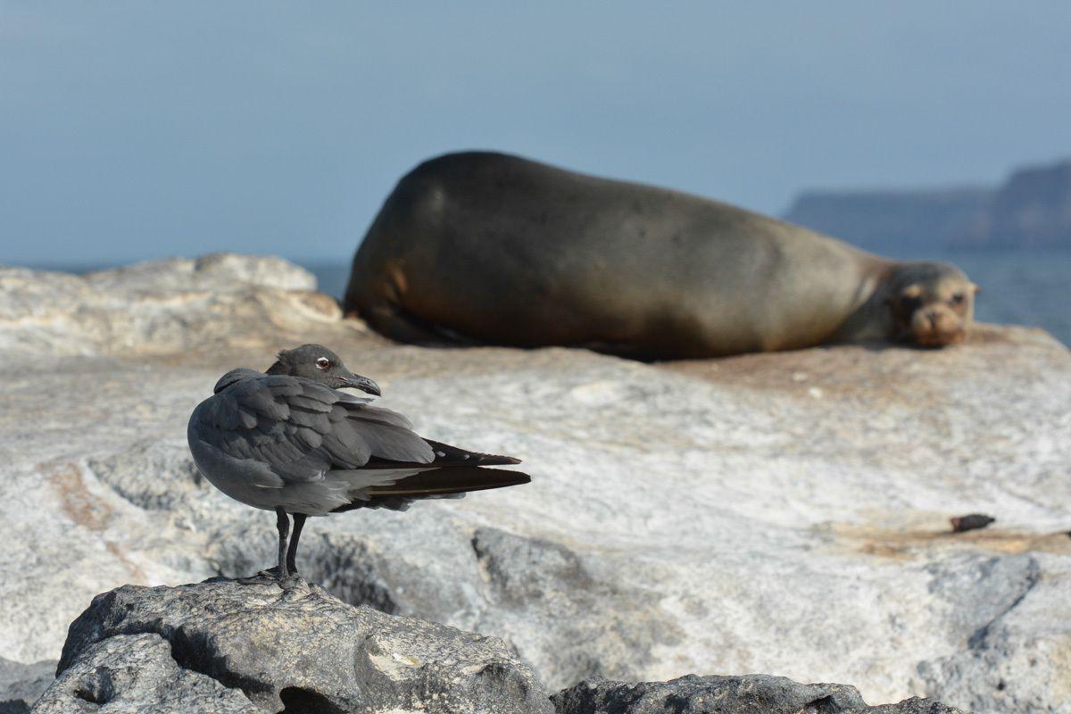 espèce rare endémique aux iles Galapagos
