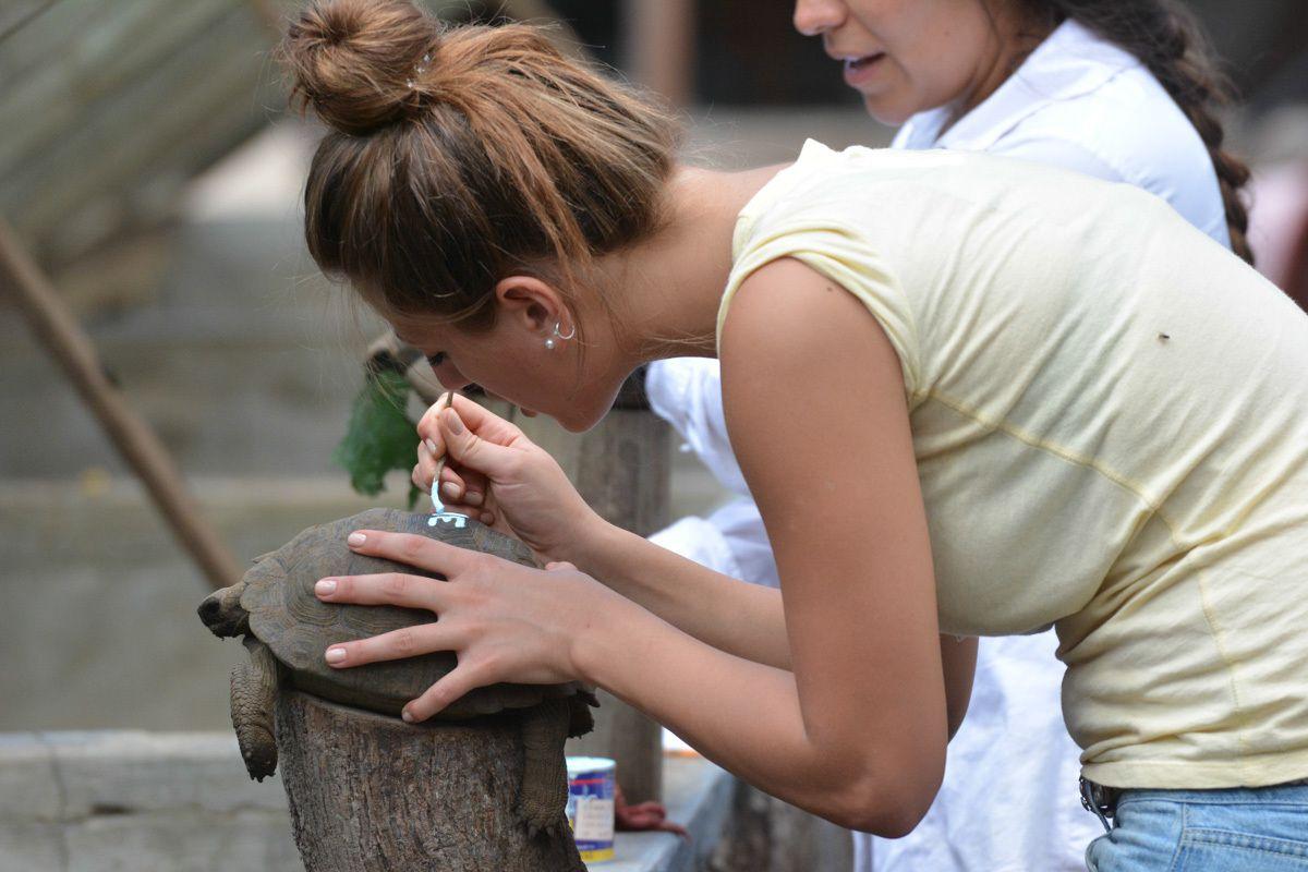 La tortue geante ou Galapago