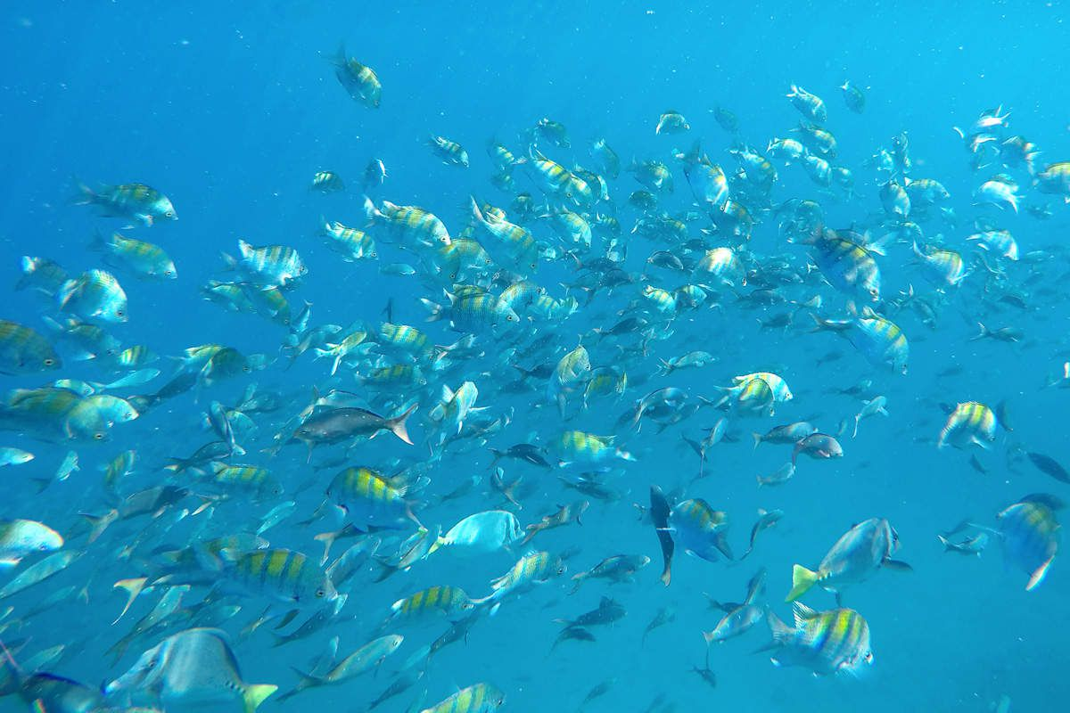 Faune sous marine