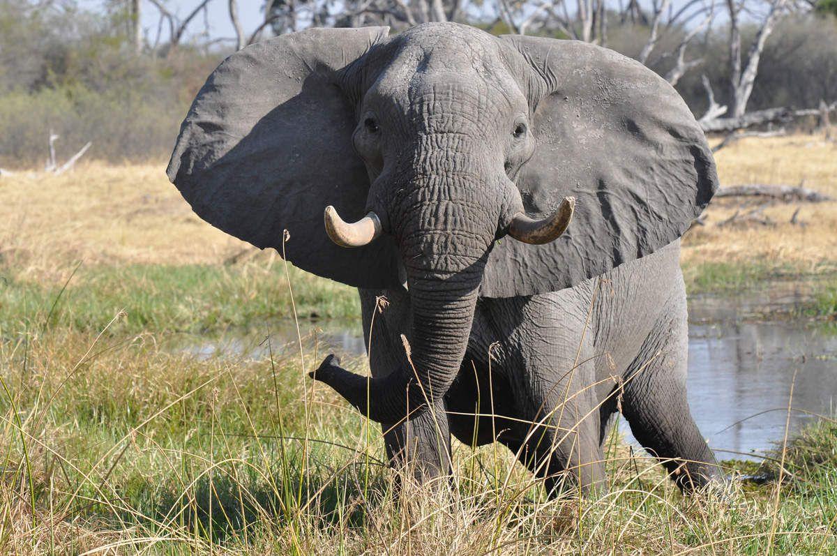 Mammifères du Botswana