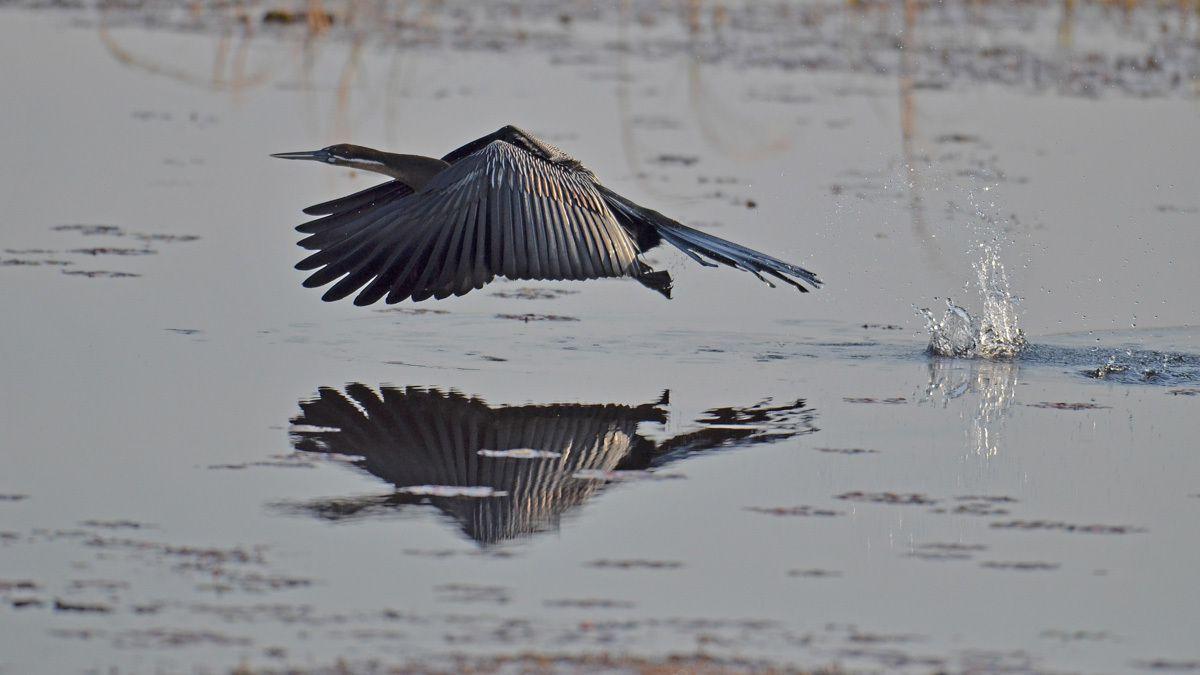 Oiseaux du Botswana