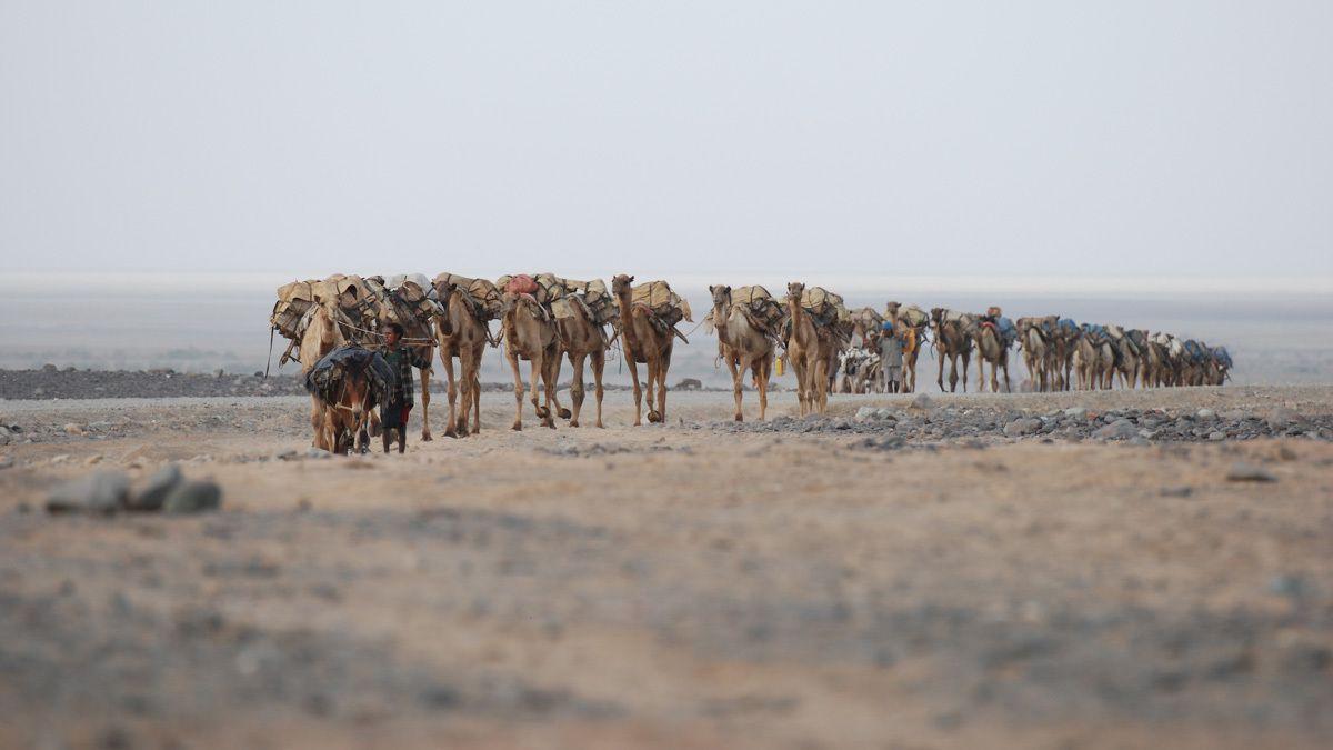 Les forçats du sel du lac Karoum