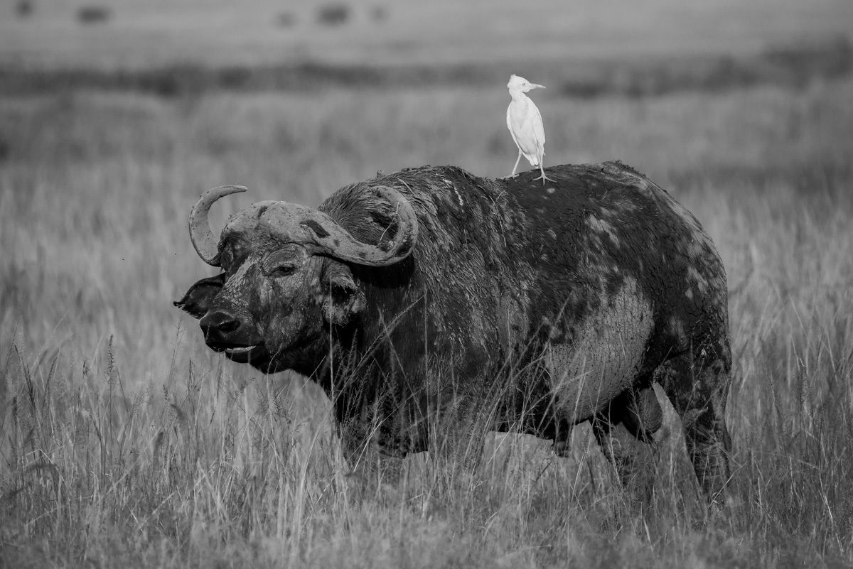 Noir et Blanc- Kenya